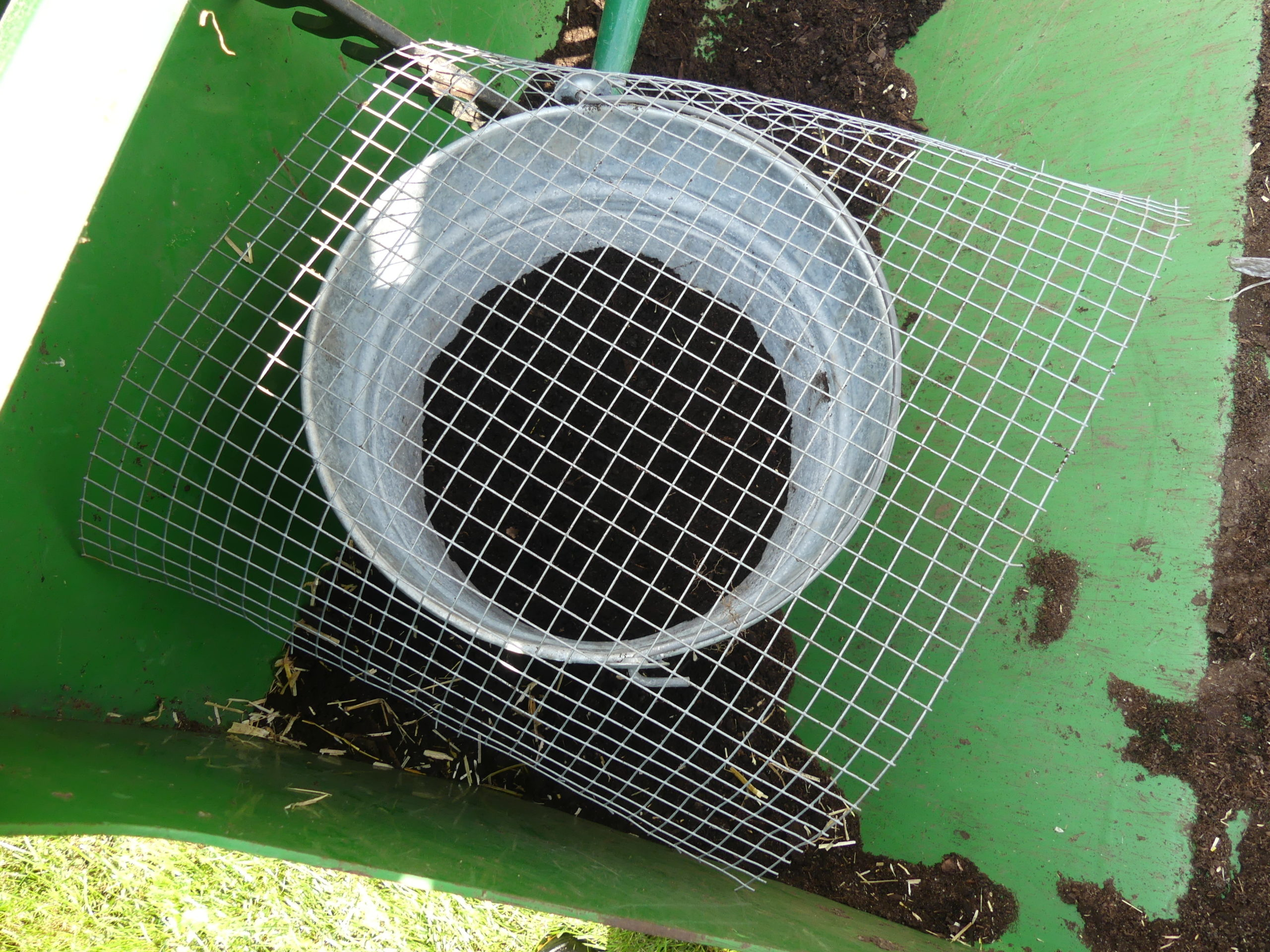 Some of the soil used for filling in gets screened through a quarter-inch mesh and into a pail.  This soil is then used to lightly cover the seed bed with an eighth-inch of soil.