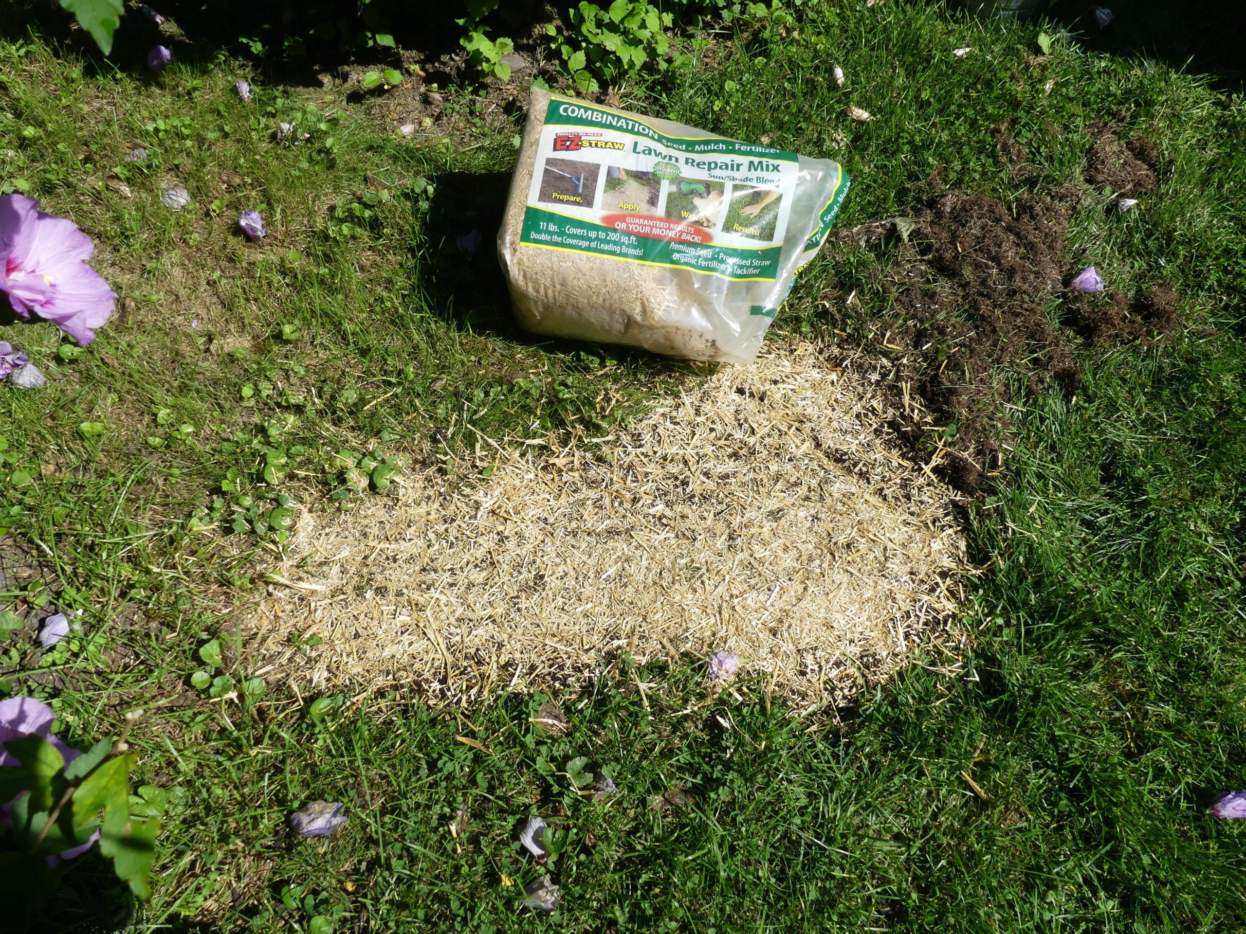 All-in-one lawn patch products that contain seed, mulch and fertilizer are available but rarely have quality seed and you can't choose what seed is in the mix.