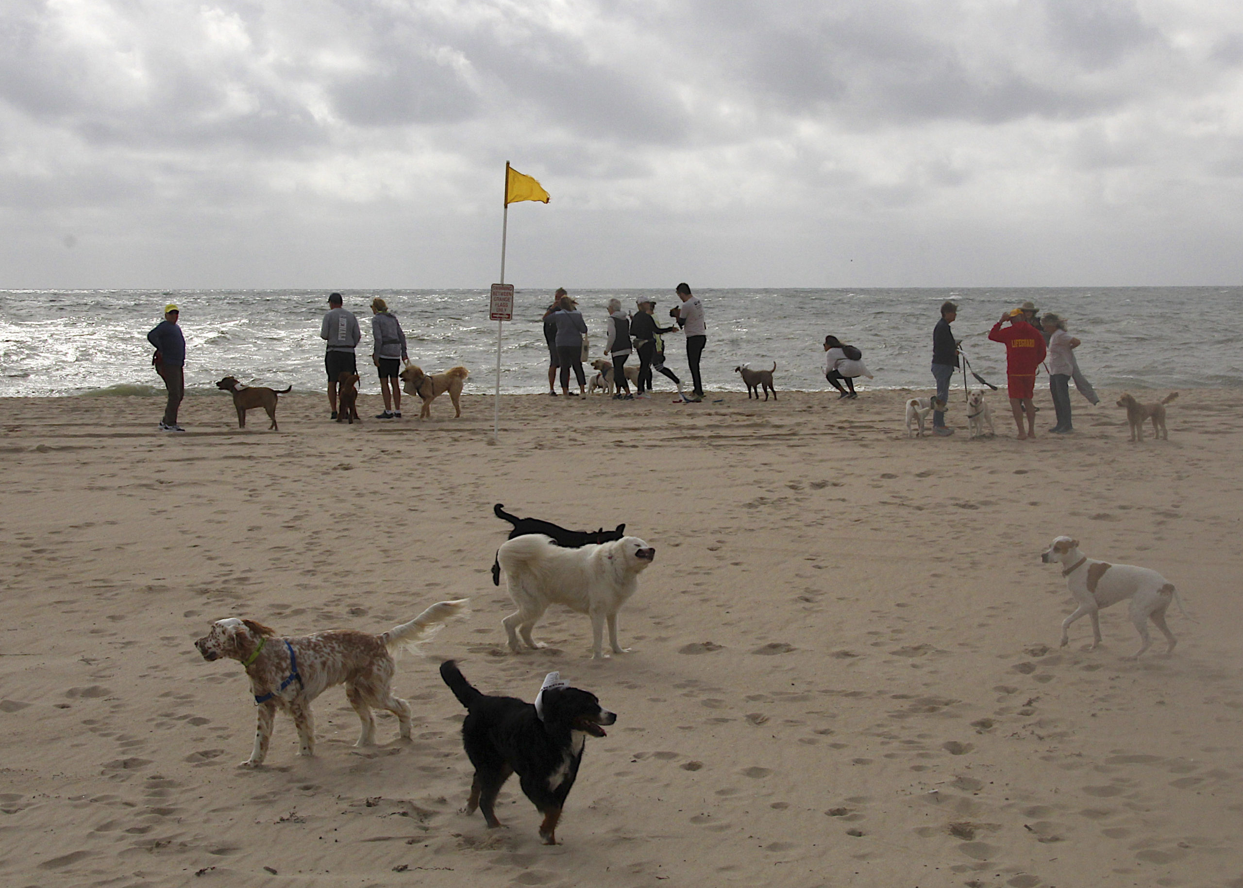 The Animal Rescue Fund of the Hamptons hosted it's annual