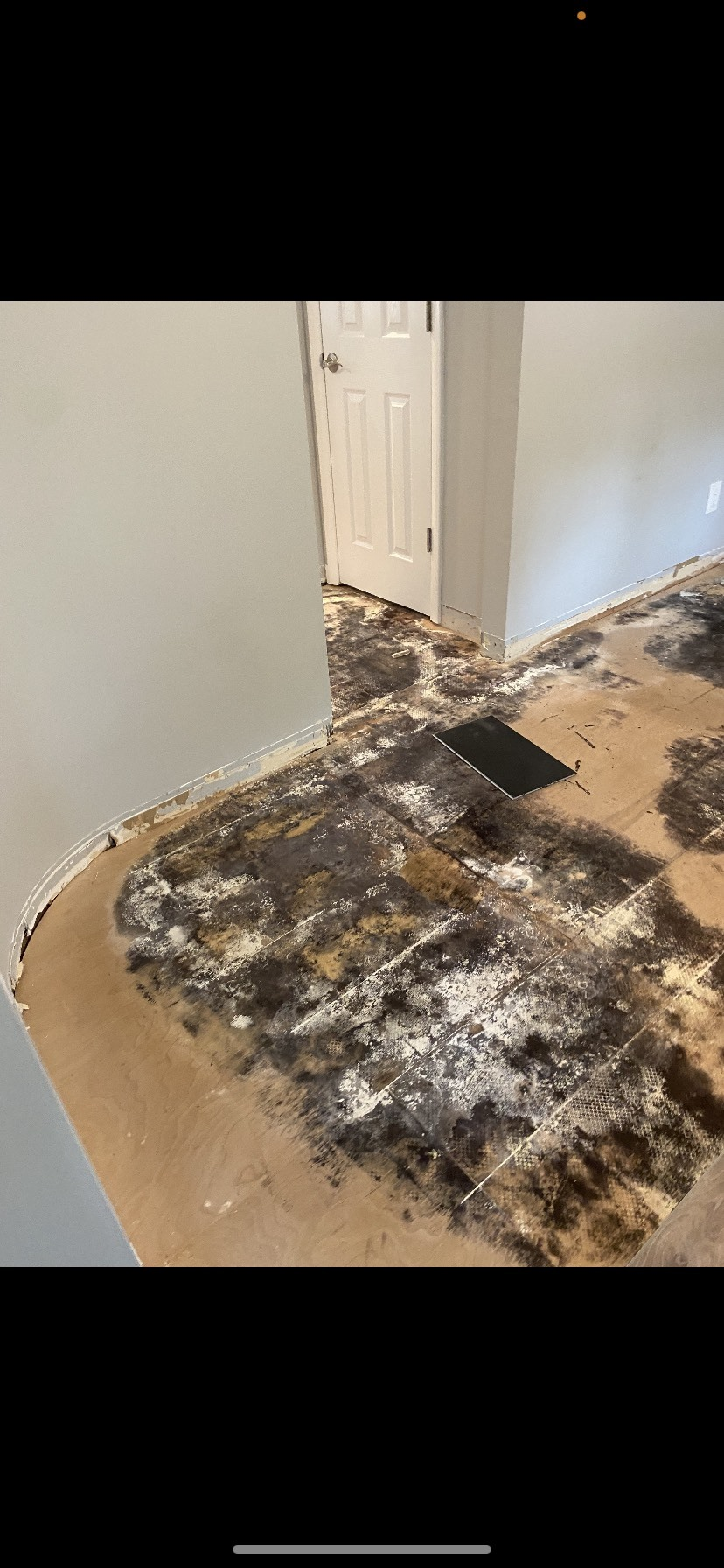 Mold that covers more than a small area typically needs to be dealt with by a professional.