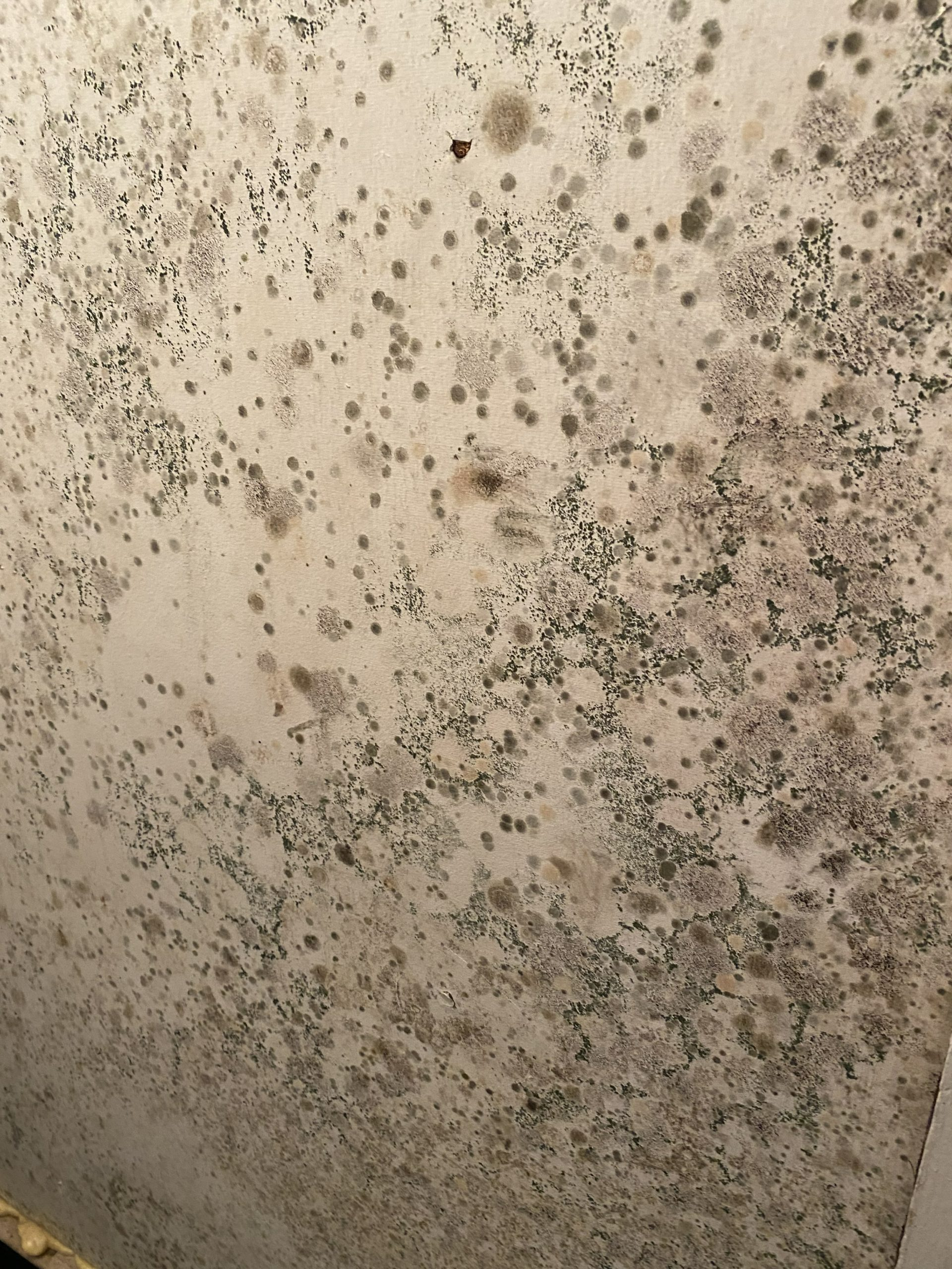 Mold can feed off anything that was once living, including drywall and even wood framing.